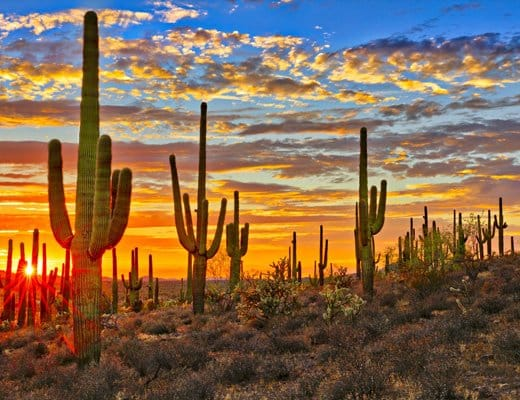 Cottonwood Tucson Arizona