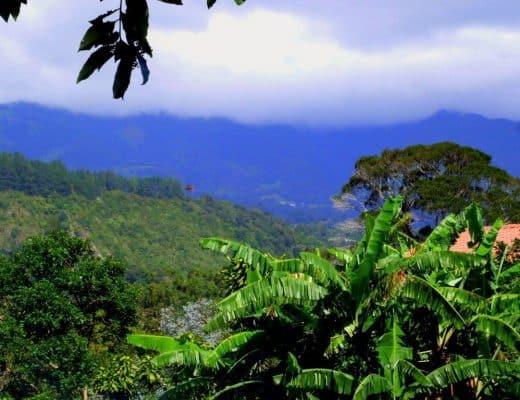 Mountain_view-520x400