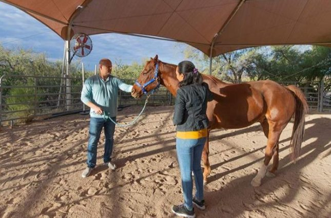 equine therapy at sierra tucson